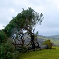 llanfyllin-lonely-tree-fallen-3