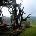 llanfyllin-lonely-tree-fallen-6