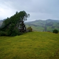 llanfyllin-lonely-tree-fallen-7