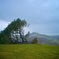 llanfyllin-lonely-tree-fallen-8