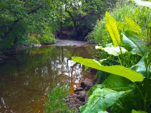 cain river llanfyllin  016